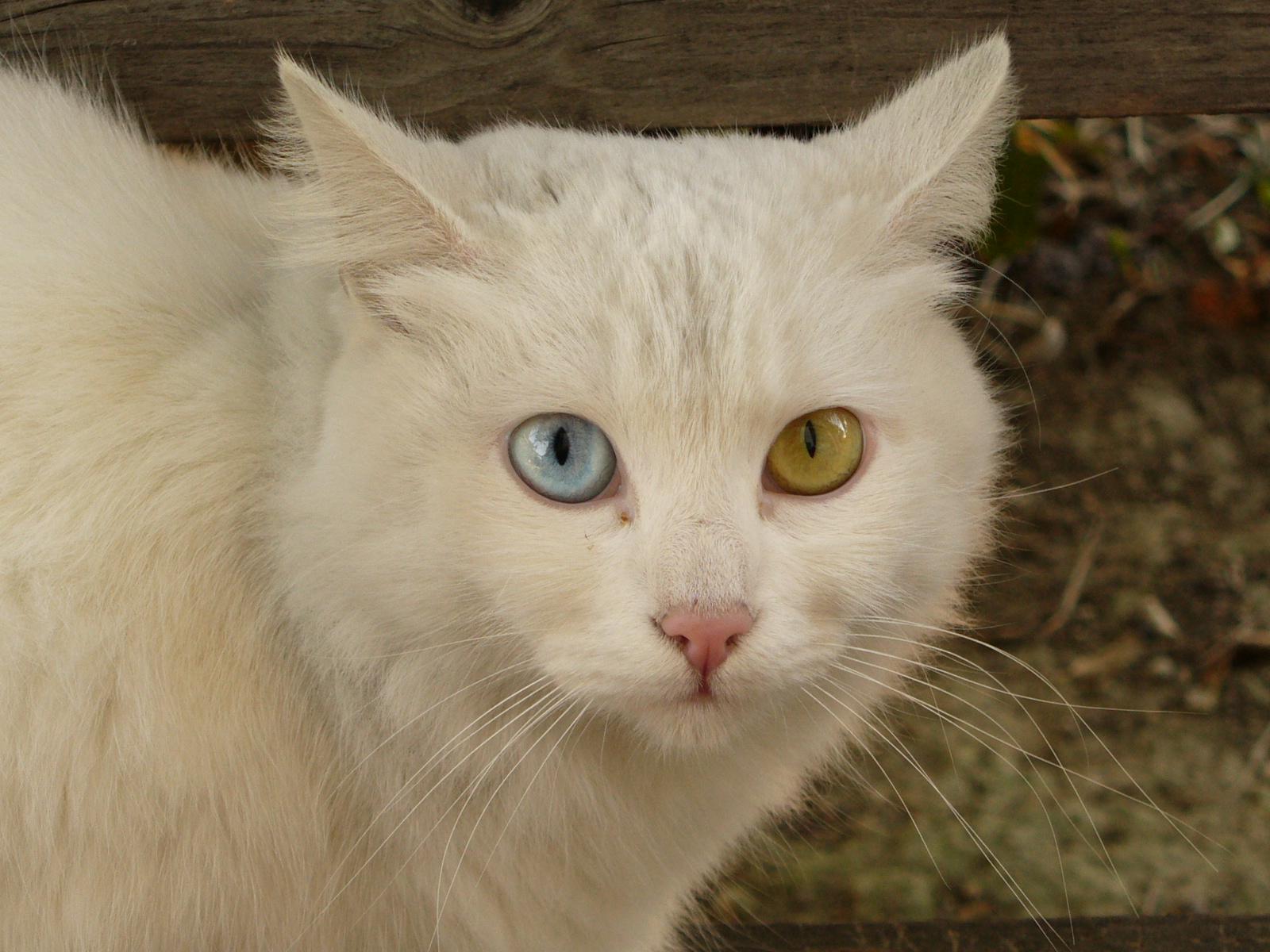 console_toolkit/exercise_files/pictures/.secret_dir/cat_hidden.jpg